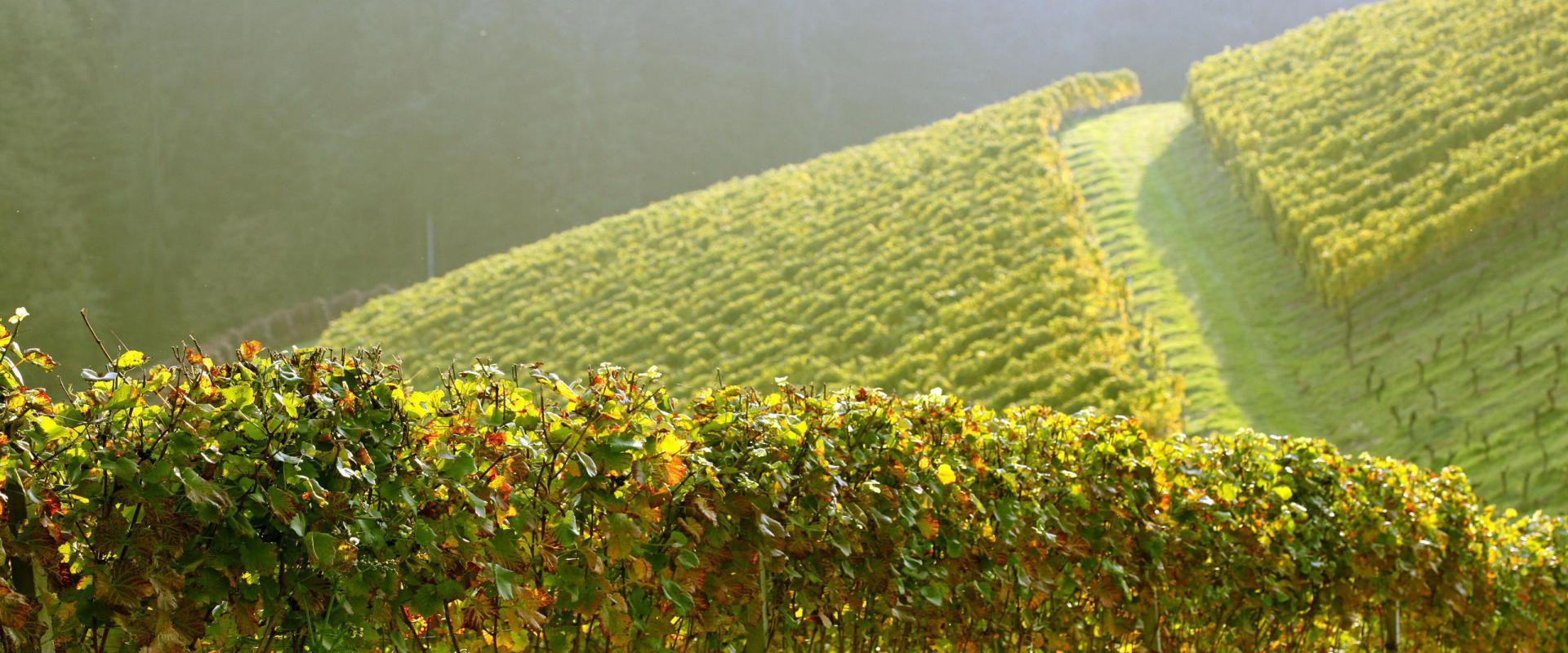 A la découverte des vignobles méconnus et de leurs cépages